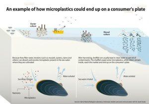 Ejemplo de cómo los microplásticos pueden acabar en nuestros platos de comida
